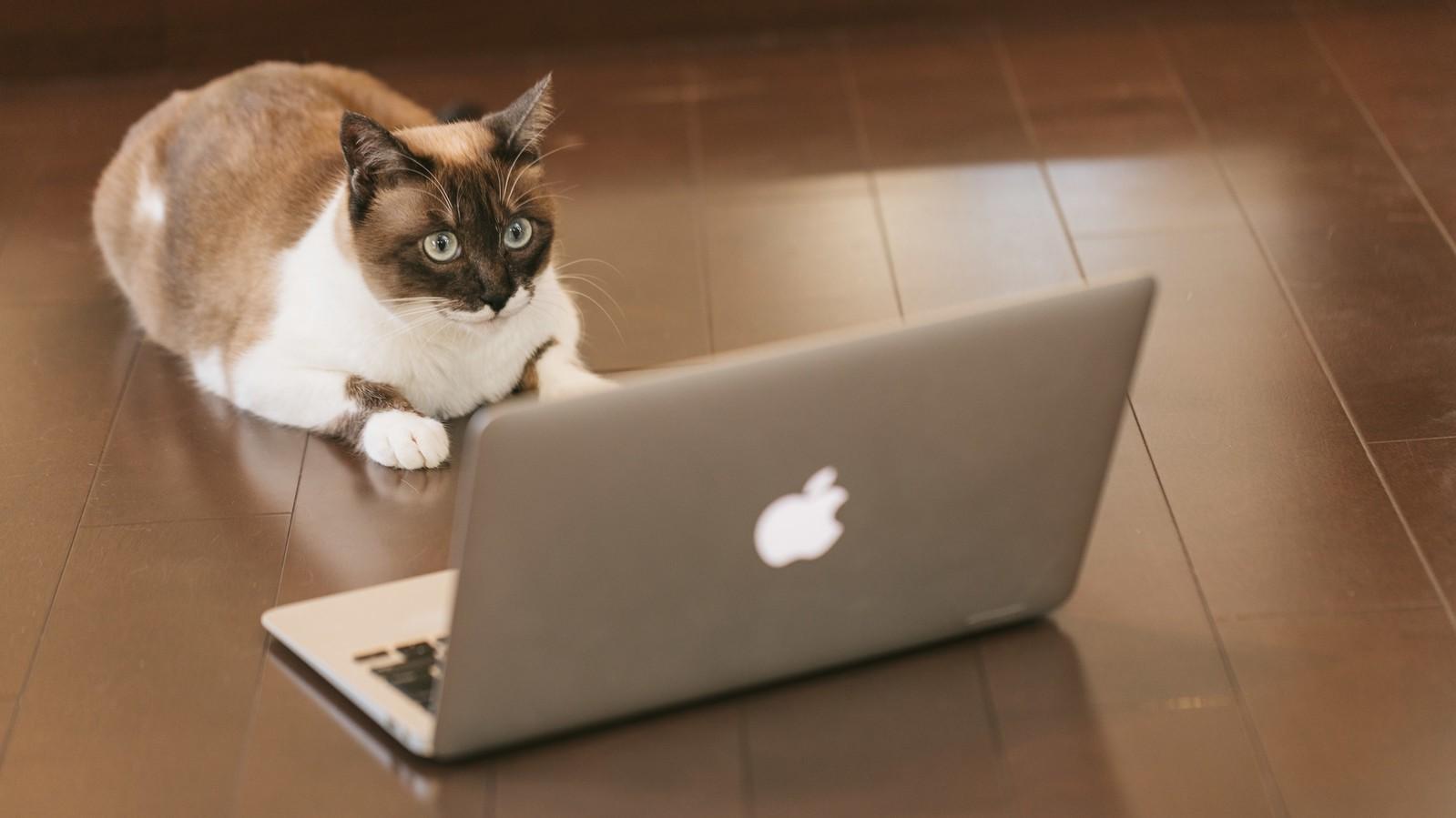 猫がパソコンで無料相談予約
